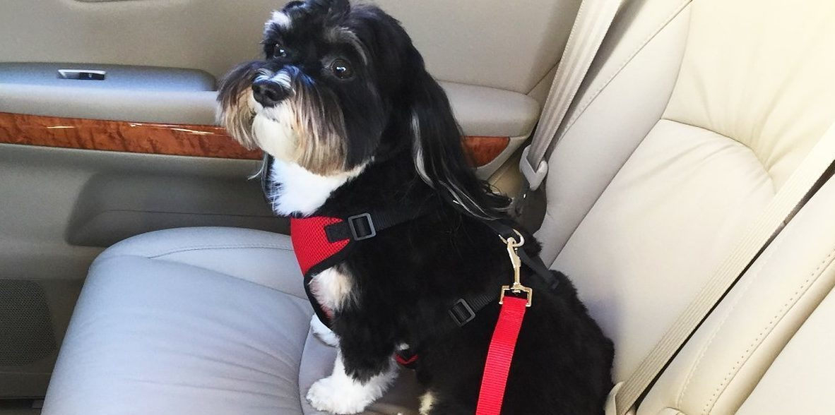 Car dog harness