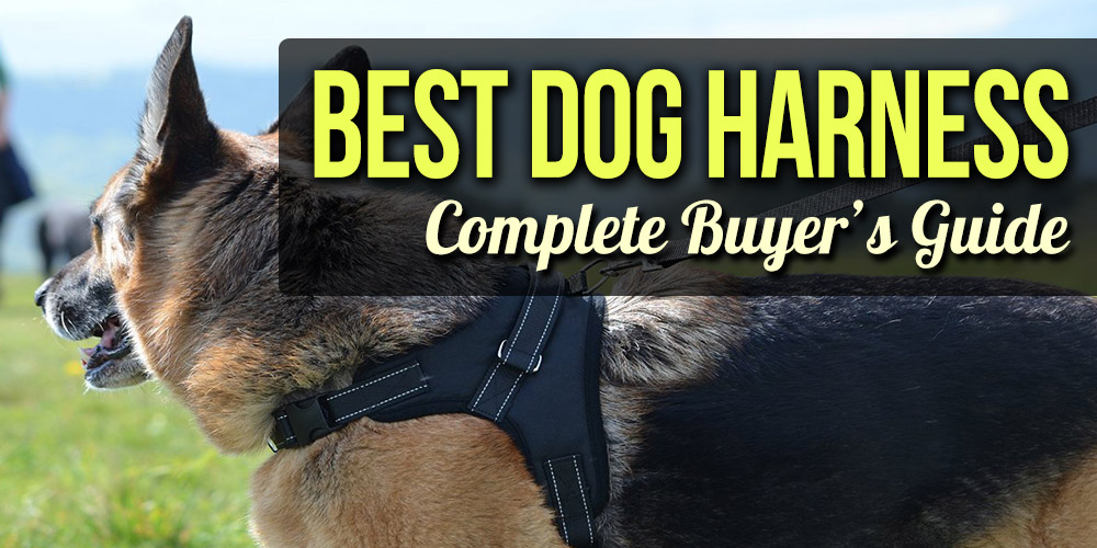 Best Dog Harness - Harnesses for Dogs