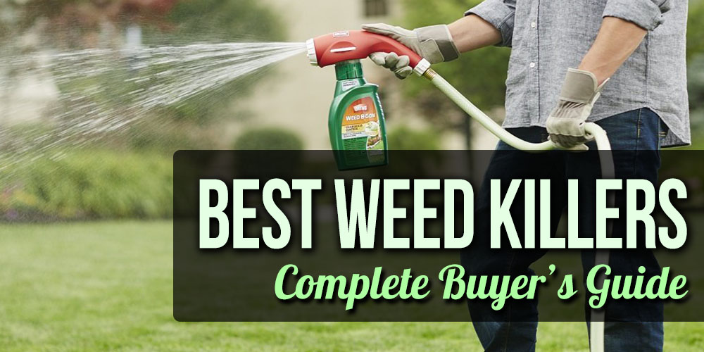 Best Weed Killers Review - Weed Killer for Sale Reviews