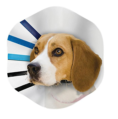 How To Make Your Own Dog Cone Collar
